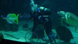 Foto de El miércoles 16 de abril de 2014 se sumergió una bicicleta en el tanque de los tiburones del Acuario de Gijón para celebrar el Día Mundial de la Bicicleta