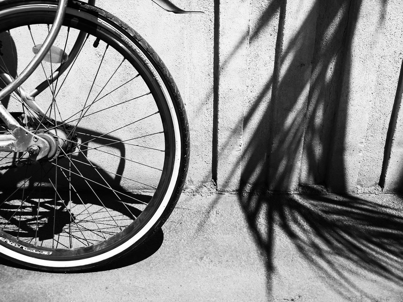 Elche - Patricia Pérez Adsuar - Elche, sol, palmeras y bicicletas